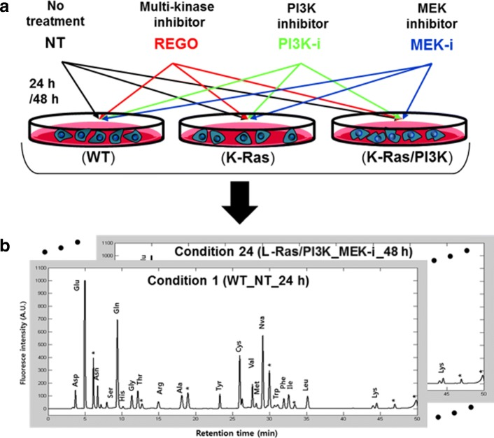 Overview of profiling free amino acids in cells. a Treatment of inhibitors to cells. The three types of isogenic MCF-10A cells including WT, K-Ras, and K-Ras/PI3K were treated for 24 or 48 h with three different kinase inhibitors: multiple kinase inhibitor (REGO), PI3K inhibitor (PI3K-i), and MEK inhibitor (MEK-i). Non-treated (NT) cells were used as controls. b Quantification of amino aicd levels. The IFAAs were extracted, chemically labeled, and separated to generate the amino acid profile in triplicate for 24 different conditions. The qunatified AA levels from each profile were represented into a 19-by-1 vector for the subsequent analysis. Note that unassigned peaks in an HPLC chromatogram were marked with *