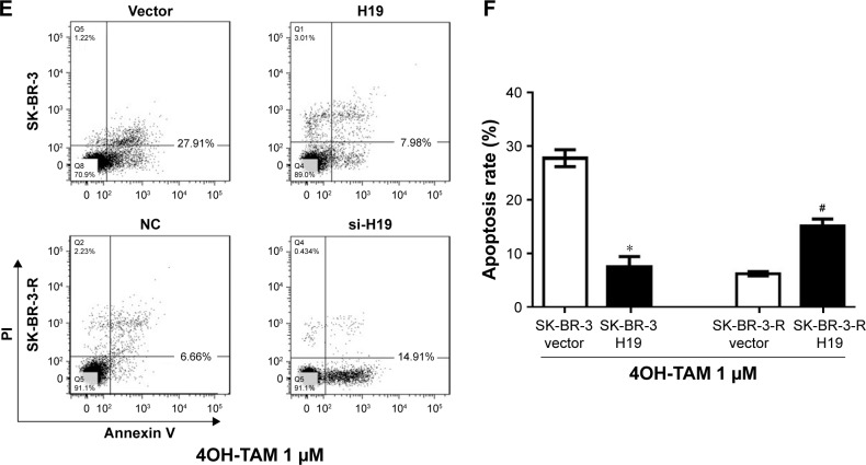lncRNA H19 expression manipulates the tamoxifen sensitivity of breast cancer cells. Notes: lncRNA H19 mimic was used to transfect breast cancer cells to increase H19 expression level and H19 siRNA was used to knockdown H19 expression level in breast cancer cell lines. Then, 72 hours after transfection, tamoxifen with dose escalation were added to the media as an anti-tumor agent. After 48 hours co-culture (120 hours post transfection), the proliferation of the cells was determined by CCK8 kit and the apoptotic cells were observed by performing Annexin V and PI double staining. ( A ) Cell survival rate of MCF-7 (* P