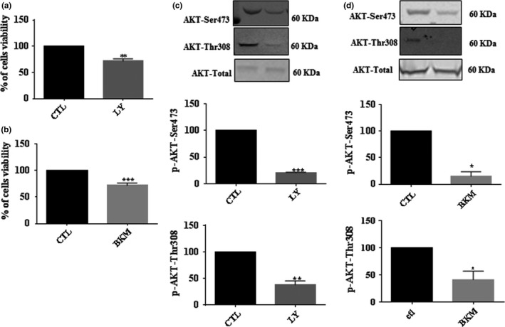 The Effect of PI3K/AKT inhibitors on primary Schwann cells (pSC) viability. pSC cultures were treated with PI3K inhibitors LY290042 (a), and BKM120 (b) for 48 hr followed by crystal violet assay to measure cell viability. The effect of LY290042 (c) and BKM120 (d) on AKT phosphorylation was examined by Western blot. The pSC cells lysates were prepared and subjected to specific antibodies against AKTp‐Ser473, AKTp‐Thr308, and total AKT protein. The blots were then analyzed using the Li‐Cor Odyssey system. A representative Western blot is shown above each bar graph. The data represent mean ± SE of at least four independent experiments. * p
