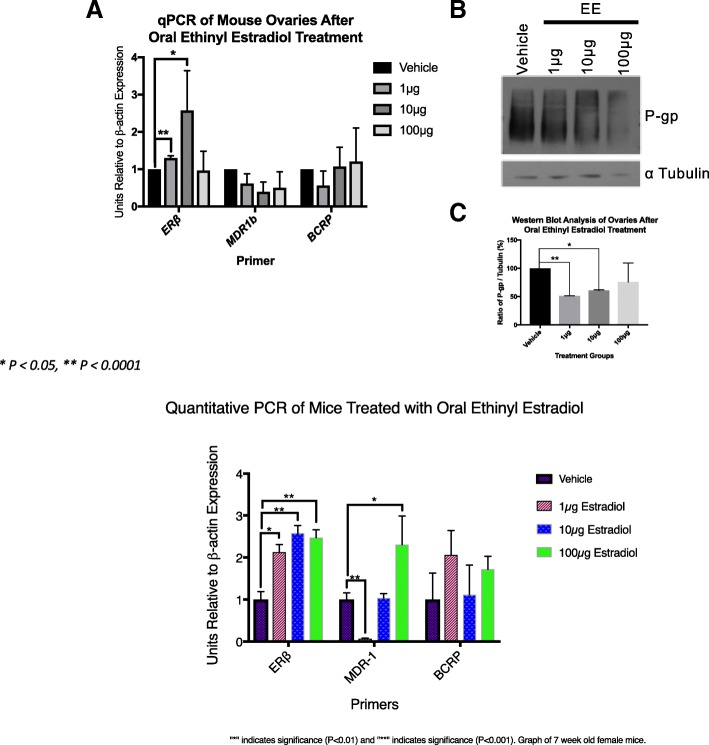 Estrogen doesn't modulate steady state mRNA message of MDR-1 but decreases protein level In this experiment, the control (vehicle only) and estrogen treated animals' ovaries were removed and placed in TRizol for RNA extraction. RNA was then used to make complementary DNA. Quantitative Real-Time Polymerase Chain Reaction was performed using (ERβ) as a control that indicated the mice did actually receive the appropriate dosing. All samples were standardized to β-actin mRNA. The immunoblots were done by using whole ovary lysates of control and estrogen treated mice. Dosages of 1 μg and 10 μg were significantly decreased compared to controls. BCRP did not show a difference with our qPCR data, but we attempted to do immunoblotting without success due to unsuitable antibodies