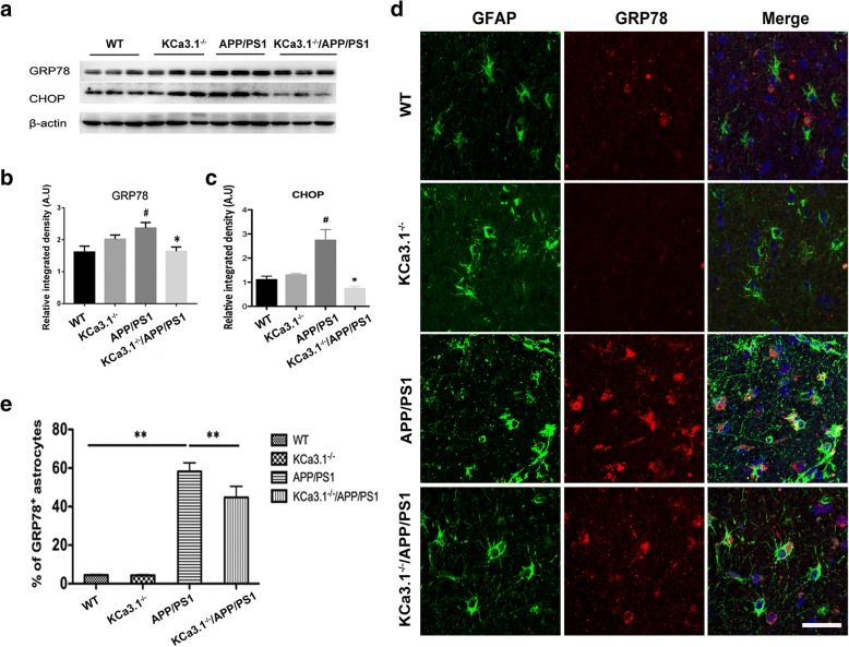 KCa3.1 contributes to increased ER stress in APP/PS1 mice. a Western blot analysis of GRP78 and CHOP protein levels in hippocampal extracts of 15-month-old WT, KCa3.1 −/− , APP/PS1, and KCa3.1 −/− /APP/PS1 mice. b , c Data are presented as the mean ± SEM ( n = 3–5). The OD values of GRP78 ( b ) and CHOP ( c ) were normalized to that of β-actin. # p