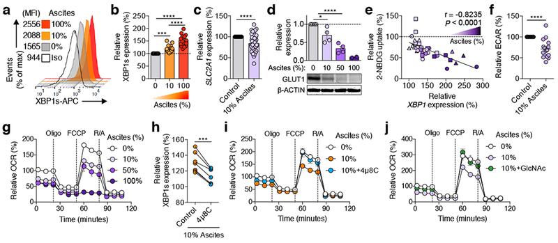 OvCa ascites limits glucose uptake and causes IRE1α/XBP-mediated mitochondrial dysfunction in human CD4 + T cells. a - f , T cells were activated via CD3/CD28 stimulation for 16 h in the absence or presence of OvCa ascites supernatants at the indicated concentrations. Histograms ( a ) and quantification ( b ) of XBP1s staining ( n = 16); Iso, isotype control. c , SLC2A1 expression was determined via qRT-PCR ( n = 48). Immunoblot and quantification ( d ) of GLUT1 in ascites-exposed CD4 + T cells. Density of GLUT1 was normalized to β-ACTIN, and data are shown as the relative expression compared with the untreated control ( n = 4 for 10% and 50% ascites; n = 2 for 100% ascites, all from two independent experiments). e , Glucose uptake was assessed using 2-NBDG and XBP1 was determined in the same sample. Symbols depict ascites from 3 independent patients tested at increasing concentrations on CD4 + T cells from multiple donors ( n = 37). Baseline ECAR ( f ) and OCR profile ( g ) of CD4 + T cells exposed to ascites ( n = 16). CD4 + T cells were treated with 4μ8C ( h, i ) or GlcNAc ( j ) for 1 h and then stimulated via CD3/CD28 for 16 h in the presence of 10% ascites. h , XBP1s determined by FACS ( n = 7). i , OCR profile in 4μ8C-treated T cells exposed to ascites ( n = 9). j , OCR for GlcNAc-treated T cells exposed to ascites ( n = 5). Data are shown as mean ± s.e.m ( b, c, d, f, g, i, j ). n -values represent biologically independent samples ( b-k ). One-way ANOVA with Tukey's post-test ( b ); Two-tailed Student's t -test ( c , f ); One-way ANOVA with Bonferroni's post-test ( d ). Spearman's rank correlation test, 95% CI −0.9076 to −0.6760 ( e ); Two-tailed paired Student's t -test ( h ); * P