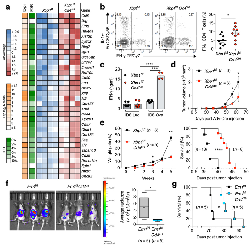 T cell-intrinsic IRE1α-XBP1 signaling promotes OvCa progression. a , Transcriptional profiling of WT versus XBP1-deficient CD4 + T cells sorted from the peritoneal cavity of mice bearing metastatic ID8- Def29/VegfA OvCa for 20 days. Top upregulated genes in XBP1-deficient CD4 + T cells are shown ( n = 4). b , FACS analyses of OvCa-associated CD4 + T cells from the indicated mice bearing metastatic OvCa for 20–23 days. Representative intracellular staining for IFN-γ and IL-17 (left) and global IFN-γ analysis (right) in CD45 + CD3 + CD4 + T cells ( n = 9). c , IFN-γ secretion by CD4 + T cells isolated from the peritoneal cavity of the indicated OvCa-bearing mice upon ex vivo stimulation with OVA peptide ( n = 6 for all groups except for XBP1-deficient hosts challenged with ID8-ova). d , Growth of p53/K-ras-driven ovarian tumors in hosts reconstituted with bone marrow from the indicated genotypes ( n = 6). e , Ascites accumulation (left, n = 5–6) and overall survival (right, n = 8–13) for the indicated mice bearing ID8- Def29/Vegf-A OvCa. f , Imaging (left) and quantification (right) of peritoneal carcinomatosis in Ern1 f/f or Ern1 f/f Cd4 cre mice bearing luciferase-expressing ID8 OvCa for 20 days ( n = 5). g , Survival rates for mice depicted in panel f . n -values represent biologically independent mice ( a-g ). Data are shown as mean ± s.e.m. ( b, c, d, e ). Boxes represent median ± interquartile range and whiskers indicate minimum and maximum ( f ). Two-tailed Student's t -test ( b ); One-way ANOVA with Tukey's post-test ( c ); Two-tailed Mann-Whitney test ( d, e, f ); Log-rank test ( e , g ). * P