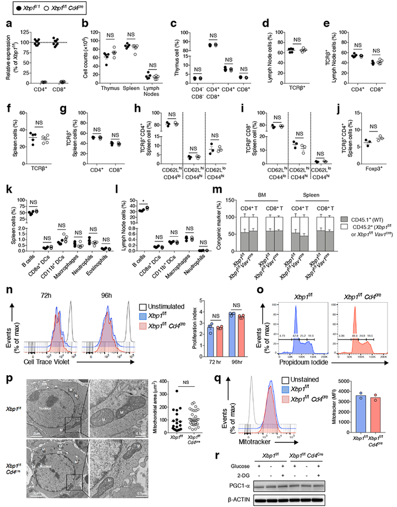 Characterization of mice devoid of XBP1 in T cells. a , Deletion efficiency was analyzed by qRT-PCR using a primer set that specifically detects the exon 2 region of Xbp1 . Data were normalized to endogenous expression of Actb and presented as relative expression compared with WT ( n = 8). b , Absolute cell numbers in the thymus, spleen and lymph nodes. c , FACS-based phenotyping of double negative (CD4 - CD8 - ), double positive (CD4 + CD8 + ), or single positive (CD4 + or CD8 + ) thymocytes. d - g, Frequency of TCRβ + cells ( d , f ) and CD4 + or CD8 + cells (gated on TCRβ + cells) ( e , g ) in lymph nodes or spleen. h - i , Expression of CD44 and CD62L on both CD4 + ( h ) and CD8 + ( i ) TCRβ + subsets in the spleen. j , Frequency of splenic TCRβ + CD4 + FoxP3 + T cells. k - l , Frequency of non-T cell populations among total live cells in spleen ( k ) and lymph nodes ( l ). b - g , n = 5; h - j , n = 3; k - l , Xbp1 f/f ( n = 4), Xbp1 f/f Cd4 cre ( n = 5). m , Reconstitution efficiency of CD4 + and CD8 + T cells in bone marrow and spleen from mixed bone marrow chimeras ( n = 3 per chimera type). Chimeras were generated with a mixture of wild-type bone marrow (CD45.1 + ) plus either Xbp1 f/f or Xbp1 f/f Vav1 cre bone marrow (CD45.2 + ). n , Flow cytometry assessing cell proliferation of CD4 + T cells stained with the division-tracking dye (Cell Trace Violet). Cells were left unstimulated or stimulated for 72 and 96 h with plate-bound <t>anti-CD3</t> (5μg/ml) and soluble anti-CD28 (1μg/ml). Histograms (left) and proliferation index (right) are shown ( n = 4). o , Cell cycle analysis of CD4 + T cells activated for 72 h by staining with propidium iodide. Representative plots from two experiments. p , Transmission electron microscopy of in vitro activated WT versus XBP1-deficient CD4 + T cells. Naïve CD4 + T cells isolated from three biologically independent mice were activated with plate-bound anti-CD3 and soluble anti-CD28 antibodies for 48 h. White arrowheads indi