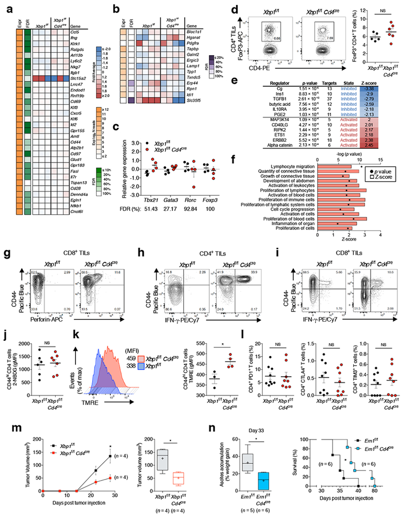 IRE1α-XBP1 signaling alters OvCa-associated T cell function and promotes malignant progression. a, Transcriptional profiling of splenic CD44 hi CD62L lo CD4 + T cells sorted from naïve WT versus XBP1-deficient mice. Expression of the differentially regulated genes identified in Fig. 4a is shown ( n = 3 per group). b - c and e - f , Analysis of WT versus XBP1-deficient CD4 + T cells isolated from mice bearing metastatic OvCa ( n = 4 per group). b , Expression of previously reported RIDD target genes. c , Relative gene expression of master transcription factors controlling helper T cell differentiation. d , Intracellular staining for FoxP3 (left) and proportion of FoxP3 + CD4 + T cells from WT ( n = 5) and XBP1-deficient ( n = 6) mice bearing metastatic OvCa for 21 days. e , Predicted upstream regulators associated with the transcriptional changes observed. f , Enriched cellular functions in XBP1-deficient CD4 + T cells at tumor sites. Z-scores greater than 2 indicate functions predicted to be significantly increased in XBP1-deficient CD4 + T cells. g , Intracellular staining for IFN-γ in CD45 + CD3 + CD8 + T cells from WT and conditional XBP1-deficient mice bearing metastatic OvCa for 20–23 days. Representative plots from three independent experiments. h - i , Intracellular staining for IFN-γ in CD45 + CD3 + CD4 + T cells ( h ) and for perforin in CD45 + CD3 + CD8 + T cells ( i ) from WT and conditional XBP1-deficient mice bearing metastatic OvCa for 29 days (late stage). Representative plots from two independent experiments. j , In vivo glucose uptake by CD44 hi CD4 + TILs in Xbp1 f/f ( n = 6) or Xbp1 f/f Cd4 cre ( n = 7) female mice bearing metastatic OvCa. k, Representative TMRE staining for OvCa-associated CD45 + TCRβ + CD44 + CD4 + T cells from tumor-bearing Xbp1 f/f ( n = 3) or Xbp1 f/f Cd4 cre ( n = 4) mice. l , Peritoneal wash samples were collected from mice at 24 days after tumor challenge and the proportion of OvCa-associated CD4 + T cells expressing PD-1,