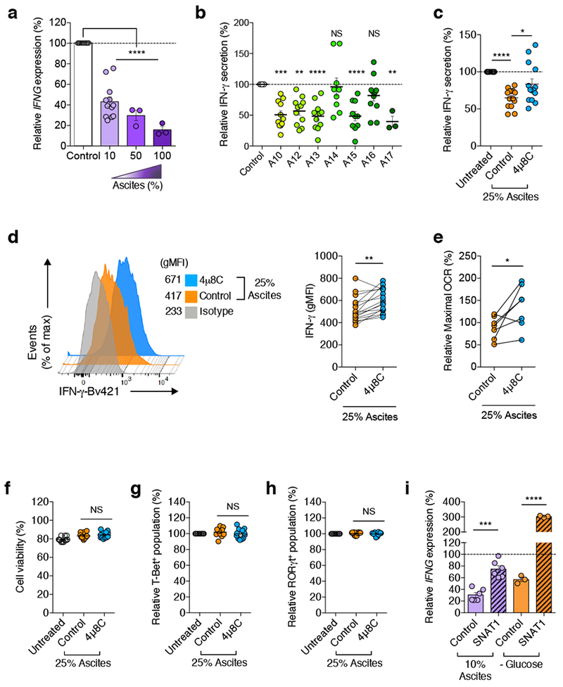 IRE1α-XBP1 regulates IFN-γ production in ascites-exposed human CD4 + T cells. a, IFNG expression in CD4 + T cells receiving CD3/CD28 activation for 16 h under increasing concentrations of OvCa ascites supernatants. 10% ( n = 12); 50% ( n = 3); 100% ( n = 3). b , CD4 + T cells were activated for 12 h, incubated for additional 36 h in the presence of 25% ascites, and IFN-γ in culture supernatants was determined by ELISA. Data were normalized to final viable cell counts in each case. n = 11 independent responder CD4 + T cells in all cases with the exception of A14 ( n = 9), A15 ( n = 10) and A17 ( n = 3). c-h , Pre-activated CD4 + T cells were treated with 4μ8C for 2 h, and 25% ascites was subsequently added to the culture for additional 12 h. c , IFN-γ in culture supernatants was quantified by ELISA ( n = 14). Data are presented as relative expression compared with matching controls that were not exposed to ascites. d , FACS histogram (left) and quantitative analysis (right) for intracellular IFN-γ in CD4 + T cells ( n = 16). e , Maximal OCR presented as percent response change compared with untreated controls ( n = 7). f , The frequency of viable cells among total cells was determined by staining with dead cell exclusion dye ( n = 12). The frequency of T-bet + ( g ) and RORγt + ( h ) populations among CD4 + T cells was determined by intracellular staining and presented as relative expression compared with ascites-untreated controls ( n = 12). i , IFNG expression by SNAT1-overexpressing human CD4 + T cells exposed to 10% OvCa ascites ( n = 6 from two independent experiments) or incubated in glucose-free media ( n = 3 from two independent experiments). Data were normalized to endogenous expression of GAPDH in each sample. Data are presented as relative expression compared with control virus-transduced T cells that were not exposed to ascites or glucose deprived. Data are shown as mean ± s.e.m. ( a-c, f-i ). n values represent biologically independent samples ( a - i ).