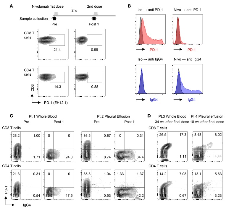A method for detection of nivolumab binding in T cells of NSCLC patients. ( A ) Flow cytometry staining of <t>PD-1</t> with PD-1 detection antibody (EH12.1) in peripheral blood CD8 and CD4 T cells before injection (Pre) and 2 weeks after the first dose of nivolumab (Post 1). ( B ) PD-1–transfected HEK293T cells (HEK293T-PD-1) exhibited binding of EH12.1 (left). After treatment with nivolumab, EH12.1 binding was completely abolished, whereas the nivolumab detection antibody (anti-IgG4, HP6025) exhibited the original expression pattern (right). Data are representative of 3 independent experiments. ( C ) Staining of PD-1 by EH12.1 and IgG4 by HP6025 in CD8 and CD4 T cells from fresh whole blood and pleural effusion was evaluated by flow cytometry at pretreatment and 2 weeks after the initial dose of nivolumab. Whole blood from Pt. 1 and pleural effusion from Pt. 2 are shown as representative analyses. ( D ) Staining of PD-1 (EH12.1) and IgG4 (HP6025) in CD8 and CD4 T cells from fresh whole blood from Pt. 3 and pleural effusion from Pt. 4 were analyzed by flow cytometry at 34 weeks and 18 weeks after the final dose, respectively.