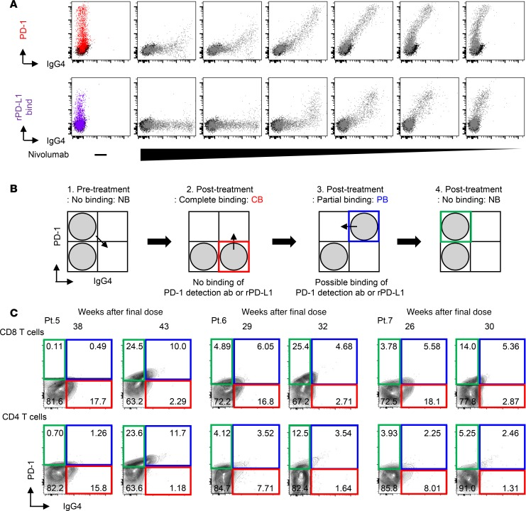 The change in nivolumab-binding status can be mapped by flow cytometry. ( A ) Human PD-1–transfected HEK293T cells (HEK293T-PD-1) were treated with serial dilutions of nivolumab (10, 2, 0.4, 0.08, 0.016, and 0.0032 μg/ml), and the staining patterns of IgG4 and PD-1 detection antibodies and the capacity of recombinant PD-L1 binding (20 μg/ml) were evaluated. Data are representative of 3 independent experiments. ( B ) Schematics present 3 different binding statuses: complete binding (CB: red gate), partial binding (PB: blue gate), and no binding (NB: green gate). ( C ) Nivolumab binding was analyzed at 2 follow-up time points, as indicated, in fresh peripheral blood CD8 and CD4 T cells from each of 3 cases that discontinued treatment (Pt. 5–7).
