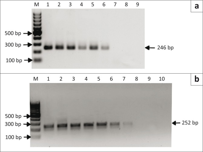 Detection of serial dilutions of plasmid <t>DNA</t> by nested polymerase chain reaction. (a) Lanes 1–8: 10-fold serial dilutions (2.5x10 7 – 2.5x10 0 copies) of Anaplasma marginale plasmid DNA (clone F48a; msp1β gene); lane 9: water negative control. (b) Lanes 1–9: 10-fold serial dilutions (2.5x10 8 – 2.5x10 0 copies) of Anaplasma centrale plasmid DNA (clone 9410i; msp2 gene); lane 10: water negative control. M: 100 base pair marker; numbers on the left and right indicate molecular sizes in base pairs.