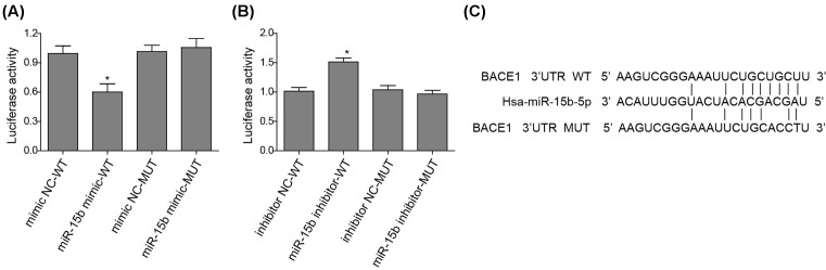 miR-15b directly targets the conserved Bace1 3′UTR sequence ( A ) The luciferase activity of wild-type (WT) or mutant (MUT) Bace1 3′UTR in the HEK 293T cells transfected with an NC or miR-15b mimic. Data are normalized to the WT mimic NC. ( B ) The luciferase activity of WT or MUT Bace1 3′UTR in the HEK 293T cells transfected with an NC or miR-15b inhibitor. Data are normalized to the WT inhibitor NC. ( C ) The schematic representation of miR-15b and its target sequence (WT or MUT) within the Bace1 3′UTR of mammals. * P