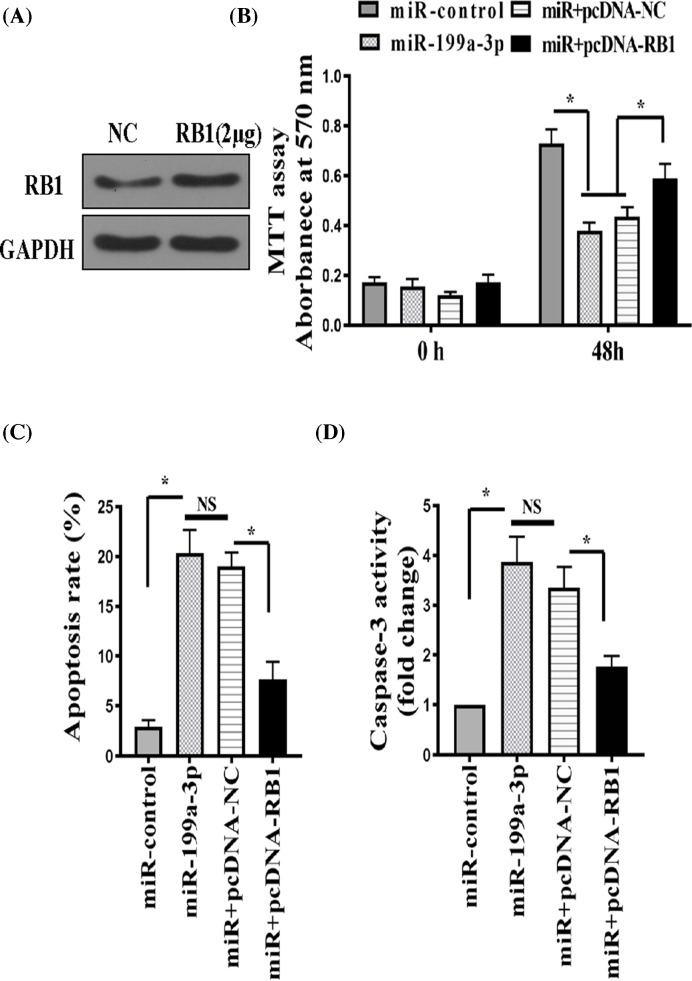 miR-199a-3p regulated RA-FLS proliferation and apoptosis partially via suppressing RB1 RA-FLS was transfected with an miR-199a-3p-expressing plasmid (miR-199a-3p) or a pSliencer 4.1-CMV puro vector (miR-control) or miR-199a-3p in combination with an RB1-overexpression plasmid (miR + pcDNA-RB1) or miR-199a-3p in combination with a negative control plasmid (miR + pcDNA-NC). ( A ) Western blot of RB1 protein in RA-FLSs transfected with negative control (NC) or pcDNA3-RB1. ( B ) Proliferation of transfected RA-FLS was measured by the MTT assay. ( C ) Apoptosis was measured by FITC Annexin V and PI staining followed by flow cytometry. ( D ) Caspase-3 activity was measured by a colorimetric method. n =6; * P