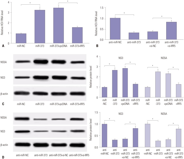 IRF5 attenuates the effect of miR-373 on HCV replication in JFH1-infected Huh 7.5 cells. (A) The effect of IRF5 on miR-373-mediated HCV RNA expression was investigated in Huh 7.5 cells transfected with miR-373, miR-373+IRF5, miR-373+pcDNA, or miR-NC. (B) The effect of IRF5 inhibition on anti-miR-373-regulated HCV RNA expression was measured in Huh 7.5 cells transfected with anti-miR-373, anti-miR-373+si-IRF5, anti-miR-373+si-NC, or anti-miR-NC. (C) The effect of IRF5 on miR-373-mediated protein expression of NS3 and NS5A was investigated in Huh 7.5 cells transfected with miR-373, miR-373+IRF5, miR-373+pcDNA, or miR-NC. (D) The effect of IRF5 interference on anti-miR-373-mediated regulation of NS3 and NS5A protein levels was evaluated in Huh 7.5 cells transfected with anti-miR-373, anti-miR-373+si-IRF5, anti-miR-373+si-NC, or anti-miR-NC. Data represent the mean±standard deviation from at least three independent experiments. * p