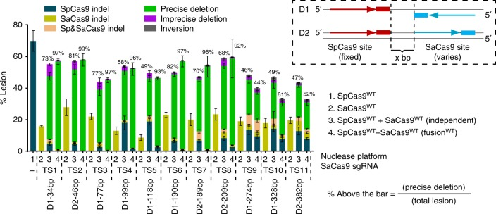Cas9–Cas9 dual nucleases display enhanced precise deletions out to ~200 bp site separation. Changes in the activity profile of SpCas9 WT –SaCas9 WT nuclease as a function of the distance between sgRNA-binding sites at the AAVS1 locus. Boxed inset: schematic of the orientation of the target sites, where the SpCas9 site is fixed and the SaCas9 site is shifted to examine the distance-dependent activity of the Cas9–Cas9 fusions (Supplementary Fig. 2 ). Bar graph: deep sequencing data, where the various lesion types and rates at AAVS1 sites are determined by UMI-corrected deep sequencing. Data are from three independent biological replicates performed on different days in HEK293T cells, where the orientation and spacing between the orthogonal Cas9 sites is indicated below the x -axis (Supplementary Data 1 ). Error bars indicate ± s.e.m