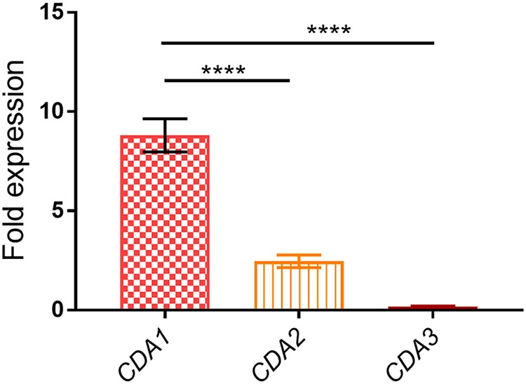 C. neoformans CDA1 is transcriptionally upregulated during host infection. Mice were inoculated with 10 7 CFU of KN99 cells. At day 7 PI, the lungs were excised and homogenized, and fungal cells were harvested and used for the isolation of total <t>RNA.</t> Total RNA (0.5 µg) was used for the synthesis of <t>cDNA,</t> which was subsequently subjected to quantitative real-time PCR using CDA1 -specific primers. C. neoformans 18S rRNA transcript levels were used as a reference gene. Transcript levels of the respective genes in the cells used as inoculum served as control. Data are the averages for two independent experiments each with three animals per group. Fold expression was calculated for each gene comparing the extent of its upregulation in the lung samples to YPD-grown samples. Significant differences in the expression levels between genes were compared by ordinary one-way ANOVA, followed by Dunnett's multiple-comparison test. (****, P