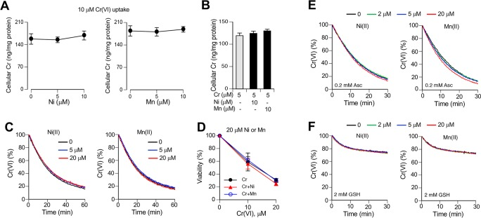 Metabolism and toxicity of Cr(VI) in the presence of Ni(II) and Mn(II) ions. H460 cells were treated with Cr(VI) in the complete cell culture medium (RPMI-1640, 50 mM HEPES, pH 7.4, 10% FBS) additionally containing 50 μM Asc and 100 μM GSH. Reduction kinetics of Cr(VI) was measured at 37 °C. (A) Cellular uptake of Cr(VI) in the presence of Ni(II) or Mn(II). Cells were incubated with 10 μM Cr(VI) for 1 h. Data are means ± SD ( n = 3). (B) Accumulation of Cr by cells preincubated with Ni/Mn ions for 2 h prior to the addition of Cr(VI) (1 h uptake). Data are means ± SD ( n = 3). (C) Kinetics of Cr(VI) reduction by Asc/GSH in HEPES-supplemented RPMI-1640 medium. Samples contained 100 μM Asc, 200 μM GSH, 20 μM Cr(VI) and 0, 5, or 20 μM Ni(II) or Mn(II). (D) Viability of cells treated with Cr(VI) in the presence of 20 μM Ni(II) or Mn(II) ions. Cells were treated with metals for 3 h followed by 48 h recovery prior to cytotoxicity measurements. Data are means ± SD ( n = 3). (E) Kinetics of Cr(VI) reduction in HEPES buffer (100 mM HEPES, pH 7.4, 50 mM NaCl) in the presence of 0.2 mM Asc or (F) 2 mM GSH. Reactions contained 20 μM Cr(VI). Graphs show means of triplicate measurements.