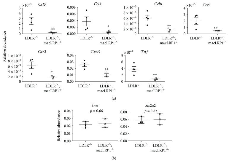 LRP1 expression increased diet-induced liver inflammation in mice. (a) LDLR −/− and LDLR −/− ; macLRP1 −/− mice were maintained on a Western diet for 2 weeks. Livers were processed and analyzed for abundance of inflammatory cytokines Ccl3, Ccl4, Ccl8, Ccr1, Ccr2, Cxcl9, and Tnf by quantitative RT-PCR ( n = 3). (b) Insulin receptor and Glut2 ( Insr and Slc2a2 , respectively) expression levels were analyzed for abundance by quantitative RT-PCR ( n = 3). The data represent mean ± SEM of results. ∗ p