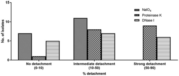 Percent detachment of preformed biofilms obtained with 18 ocular S. haemolyticus isolates after treatment with NaIO 4 , proteinase K or DNase I.