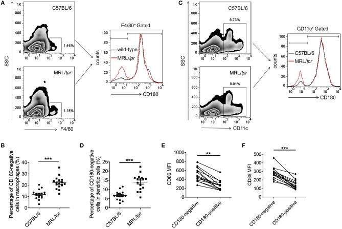 Increased percentages CD180-negative macrophages and DCs in spleens from MRL/ lpr mice. (A,B) Flow cytometric analysis of CD86 expression on F4/80 + macrophages in spleens from 18-week MRL/ lpr mice ( n = 16) and control C57BL/6 mice ( n = 16). (C,D) Flow cytometric analysis of CD86 expression on CD11c + DCs in spleens from 18-week MRL/ lpr mice ( n = 16) and control C57BL/6 mice ( n = 16). (E) Flow cytometric analysis of CD86 expression on CD180-negative and CD180-positive macrophages population in spleens from 18-week MRL/ lpr mice ( n = 16) and control C57BL/6 mice ( n = 16). (F) Flow cytometric analysis of CD86 expression on CD180-negative and CD180-positive DCs in spleens from 18-week MRL/ lpr mice ( n = 16) and control C57BL/6 mice ( n = 16). Error bars represent S.E.M. ** p
