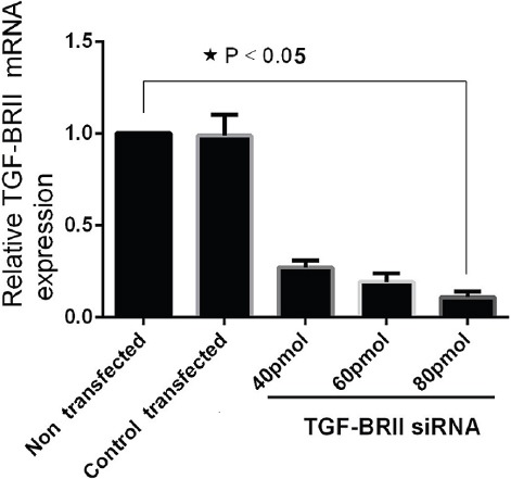 The U-373 MG Tumor Cells Transfected with siRNA (40, 60, and 80 pmol). Total RNA was extracted and mRNA was analyzed via qRT-PCR at 48 hours after transfection. The relative expression of mRNA was determined with 2-(ΔΔCT) formula (β-actin, internal control) (data presented as mean±SD; *P