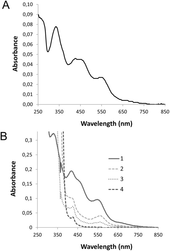 AtDGAT3 UV-visible spectroscopy. ( A ) Freshly purified Δ46AtDGAT3 UV-visible spectrum was registered in aerobic conditions with 16,5 μM of protein on a Shimadzu UV-1800 spectrophotometer. The UV-Vis spectrum presents a typical oxidized [2Fe-2S] 2+ cluster with sulfur to iron charge transfer absorption bands observed here at 335 nm, 425 nm, and 550 nm. ( B ) Δ46AtDGAT3 UV-visible spectrum of a freshly purified protein at 337 µM was recorded before (spectrum 1) and after addition of sodium dithionite at 2 mM (spectrum 2: 1 minute; spectrum 3: 30 min), or 100 mM (spectrum 4: 20 min).