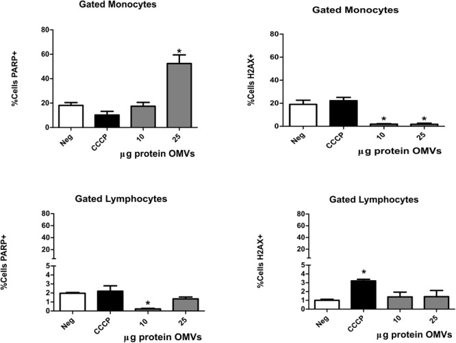 Apoptosis and DNA damage of PBMCs induced by A. hydrophila ATCC ® 7966 TM OMVs. PBMCs from healthy donor were co-cultured with different concentrations of A. hydrophila OMVs during 24 h. Apoptosis and DNA damaged was evaluated by flow cytometry with mAbs anti-PARP and anti-H2AX. CCCP was used as control for apoptosis induction. ∗ P