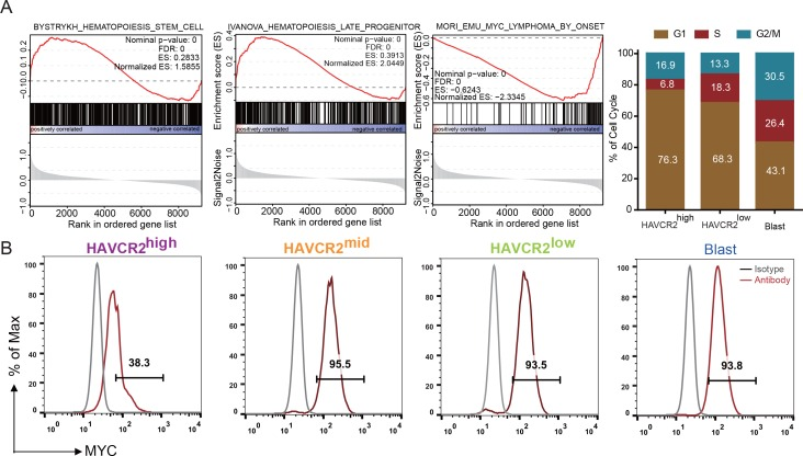 Cells in the HAVCR2 high subgroup are in a quiescent cell cycle state. ( A ) Left panel: GSEA analysis shows signaling pathways enriched in the HAVCR2 high and blast subpopulations. Right panel: Percentage of cells in each phase of the cell cycle based on single-cell RNA-seq; ( B ) Intracellular FACS analyses of MYC levels in the HAVCR2 high ,HAVCR2 mid , HAVCR2 low and blast subgroups. Gray line: isotype control.