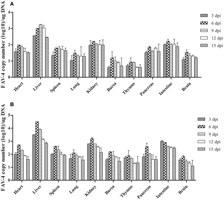 <t>FAdV-4</t> viral DNA concentration in visceral tissues samples at different dpi ( A : oral group; B : subcutaneous group).