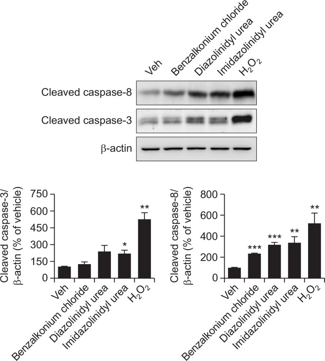 Apoptotic effect of preservatives on NPCs. The apoptotic protein expression was measured at 24 h exposure after treatment with NPCs. Cleaved caspase-3 and cleaved caspase-8 were quantified by densitometric procedure reflected as bar graphs. Values are expressed as the mean ± SEM (N=5). * p