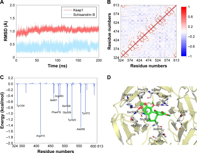Structural and energetic analysis of SchB to the binding site of Keap1 by MD simulation. Notes: ( A ) RMSD curves for the 200 ns MD simulation. ( B ) Dynamic cross-correlations of residue fluctuations from MD simulations. ( C ) Per residue contribution of binding energy of the Keap1–SchB complex. To get a clear view, only residues in the top ten contributed are shown. ( D ) Structural analysis of the ten most contributed residues of Keap1 to SchB. Abbreviations: MD, molecular dynamics; RMSD, root-mean SD; SchB, schisandrin B.