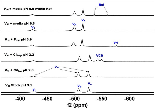 51 V NMR (78.9 MHz) spectra are shown of solution of decavanadate (10 mM V 10 , 100 mM V-atoms). The samples are from the bottom up diluted V 10 stock solution (100 mM V-atom) at pH 3.1; 10 mM V 10 in the presence of 0.48 mM and 0.97 mM citrate at pH 2.8 and 2.2, respectively; 10 mM V 10 in the presence of 24 mM P i at pH 6.9; and finally 10 mM V 10 in the presence of Middlebrook 7H9 broth medium supplemented with 10% ADC enrichment (5% BSA, 2% dextrose, 5% catalase), glycerol (0.2%, v/v) and Tween 80 (0.05%, v/v) recorded both in the absence and the presence of a capillary reference of 100 mM Na 3 VO 4 .