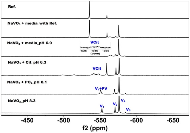 51 V NMR (78.9 MHz) spectra are shown of solution of colorless oxovanadate (40 mM V 1 , 40 mM V-atoms). The samples are from the bottom up diluted V 1 stock solution (40 mM V-atom) at pH 8.3; 10 mM V 10 in the presence of 24 mM P i at pH 8.1; 10 mM V 10 in the presence of 0.48 mM citrate at pH 6.3, and finally 10 mM V 10 in the presence of Middlebrook 7H9 broth medium supplemented with 10% ADC enrichment (5% BSA, 2% dextrose, 5% catalase), glycerol (0.2%, v/v) and Tween 80 (0.05%, v/v) recorded both in the absence and the presence of a capillary reference of 100 mM Na 3 VO 4 . The spectrum labeled Reference is of the capillary reference alone (top spectrum). The key to the signals: V-oligomers, V 1 monomer; V 2 , dimer; V 4 , tetramer; V 5 , pentamer; VCit, V-citrate complex; PV, vanadate-phosphate complex.