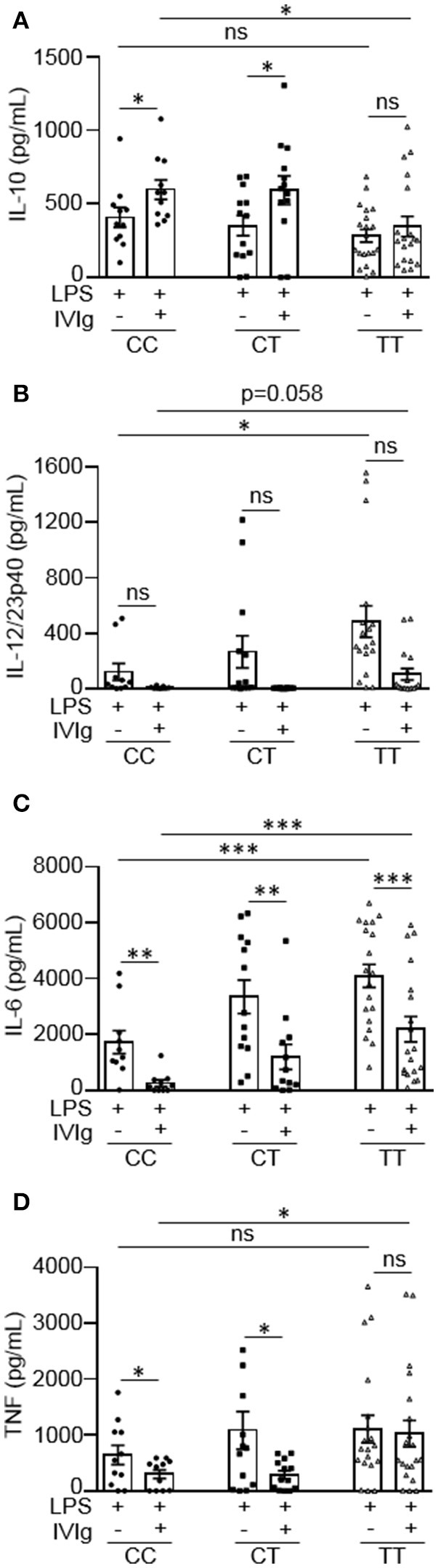 Monocytes from people with the FcγRIIA disease associated gene variant have lower IVIg-mediated anti-inflammatory responses to LPS. Monocytes from healthy control participants were stimulated with LPS (100 ng/ml) or [IVIg (5 mg/ml) + LPS (100 ng/ml)] for 24 h. Participants were genotyped for the FcγRIIA H131R polymorphism (rs1801274); CC = does not have the disease associated gene variant (low affinity), CT = heterozygous for the disease associated gene variant, and TT = homozygous for the disease associated gene variant (high affinity). Clarified cell supernatants were assayed for (A) IL-10, (B) <t>IL-12/23p40,</t> (C) IL-6, and (D) <t>TNF</t> and responses were stratified to genotype. Data are mean ± SEM from n = 11 CC participants, n = 13 CT participants, and n = 20 TT participants performed as independent experiments, assayed in duplicate. * p