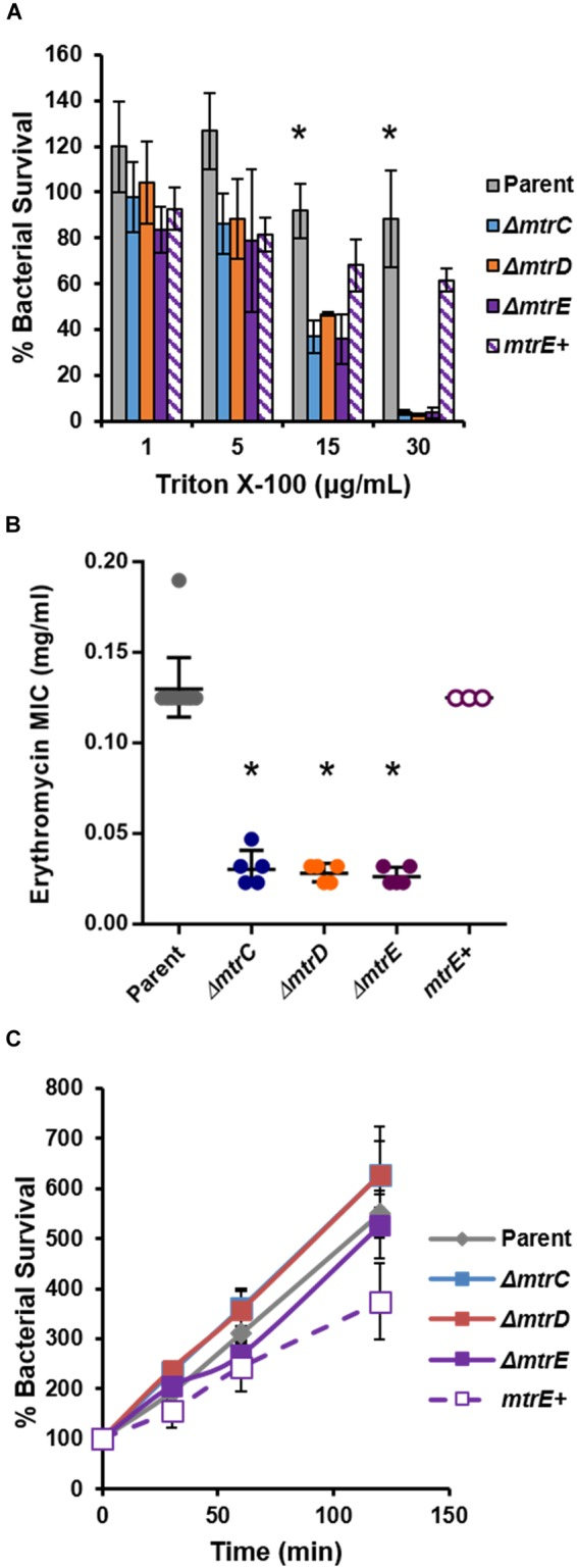 """Characterization of MtrCDE efflux pump mutants in piliated, opacity protein-deficient Gc of strain FA1090.  (A)  """"Opaless"""" parent,  ΔmtrC, ΔmtrD, ΔmtrE , and  mtrE  complement ( mtrE + ) Gc were exposed to increasing concentrations of Triton X-100 or vehicle control for 1 h. Bacterial survival was calculated as the CFU enumerated after 1 h divided by CFU at the time of inoculation, expressed relative to survival in the vehicle control (100%). Data are presented as the mean ± SEM for 3–4 biological replicates.  ∗ P  ≤ 0.05 for parent  vs.  each  mtr  mutant at the indicated concentration (one-way ANOVA followed by Tukey's multiple comparisons test).  (B)  Minimal inhibitory concentrations (MIC) for erythromycin were calculated for parent,  ΔmtrC, ΔmtrD, ΔmtrE , and  mtrE +  Gc. Data are presented as the geometric mean MIC ± SD for 3–11 biological replicates.  ∗ P"""