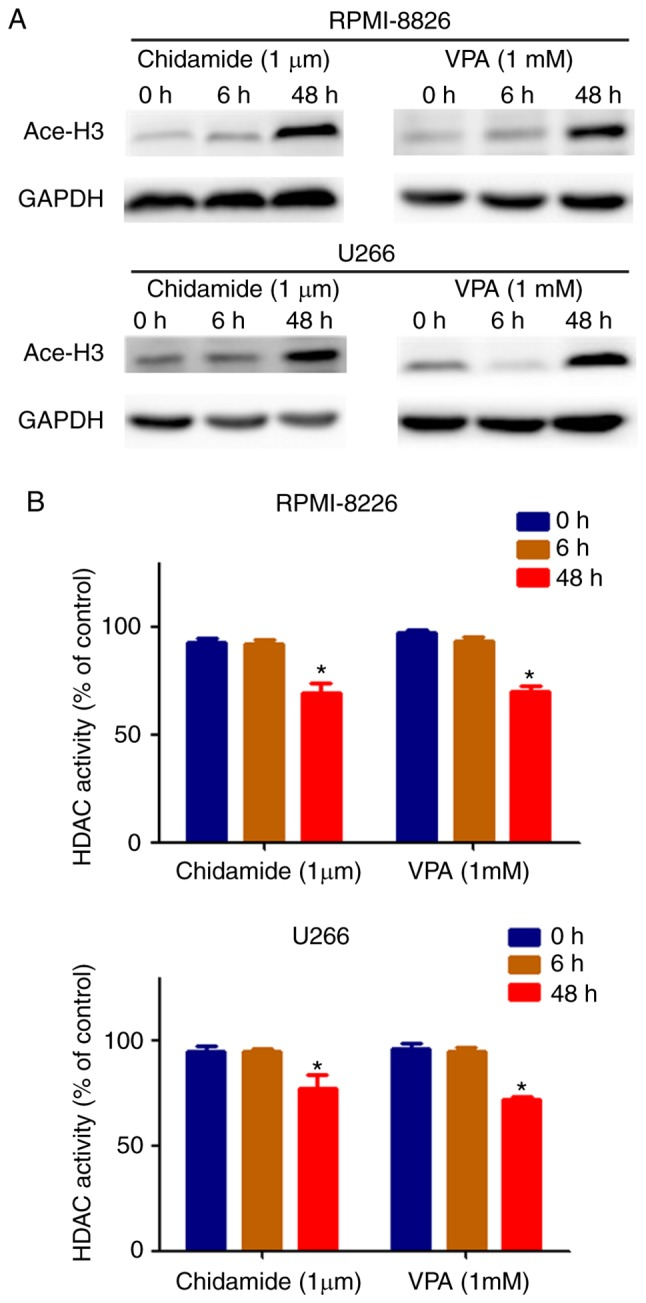 Chidamide and VPA enhance histone H3 acetylation and inhibit HDAC activity in mM cell lines at 48 h, but not at 0 and 6 h. (A) Chidamide and VPA promoted an increase in the levels of histone H3 acetylation in human MM cells (RPMI-8226 and U266). (B) Chidamide and VPA inhibited HDAC activity in human mM cells (RPMI-8226 and U266). * P