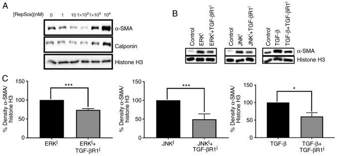 Effects of TGF-βR1 inhibition on fibroblast activation induced by ERK or JNK inhibitors. (A) CRL-2097 human dermal fibroblasts were cultured in the presence or absence of the indicated concentration of the TGF-βR1 inhibitor RepSox until day 4 and then subjected to Western blot analysis for myofibroblast markers α-SMA and calponin. Histone H3 was used as a loading control. (B) CRL-2097 human dermal fibroblasts were cultured in the presence or absence of 10 µ M U0126 (ERK i ), 10 µ M SP600125 (JNK i ), 10 ng/ml TGF-β1 and 100 nM RepSox until day 4 and then subjected to western blot analysis for myofibroblast marker α-SMA. Histone H3 was used as a loading control. (C) Western blots were analyzed using densitometry, and relative density of α-SMA/Histone H3 was compared for each mitogen-activated protein kinase inhibitor-treated or TGF-β1-treated sample compared with its corresponding TGF-βR1 inhibitor-treated sample. Statistical significance was determined using a two-tailed Student's t-test. * P