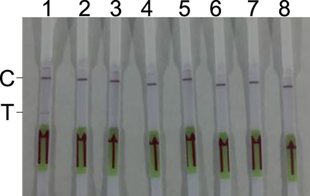 Specificity of the RPA-LF method. Strips 1 to 8 used genomic DNA samples from R . rickettsii (7×10 3 copies/reaction), C . burnetii (3×10 5 copies/reaction), O . tsutsugamushi (1×10 6 copies/reaction), R . heilongjiangensis (1×10 6 copies/reaction), R . sibirica (7×10 6 copies/reaction), S . aureus (8×10 7 copies/reaction), and S . suis (6×10 7 copies/reaction), and human plasma DNA, respectively, as templates to evaluate the RPA-LF method.