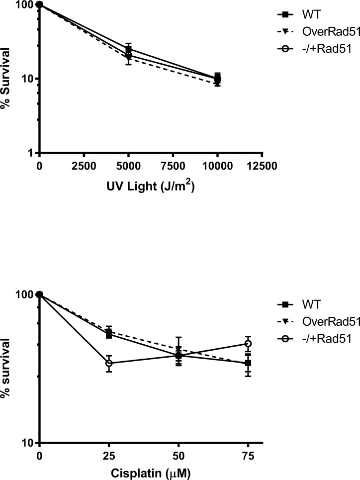 T . cruzi response to treatment with DNA cross-linking agents. Sensitivity of WT, TcRAD51 ox and TcRAD51 -/+ cells to: (A) 0, 500 J/m 2 or 1.000 J/m 2 of UV-light, or (B) 25 μM, 50 μM or 75 μM cisplatin. Parasites were counted 48 h after treatment. Numbers are represented as a percentage of untreated cells. Values represent the mean of triplicates. Error bars indicate standard deviations.