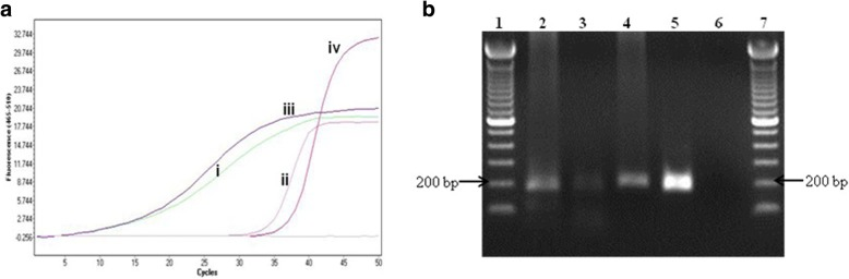 a and b : Nested real-time PCR of the primary PCR amplicon amplified from pre-processing 30 catapulted cells from a glass slide using LCM. a Quantification cycles show early detection of undiluted primary amplicon compared to the positive control. The positive control was diluted at 10-fold to avoid primer saturation. b Agarose (1.5%, 4 °C) gel electrophoresis showing the 176 bp nested real-time PCR amplification. The amplification was performed by using primers BnMS949bf and 1105br. Lane 1 and 7: 100 bp ladder; Lane 2: Heat-shock; Lane 3: Heat-shock followed by ethanol precipitation; Lane 4: QIAamp DNA Micro kit; Lane 5: positive control; Lane 6: negative control