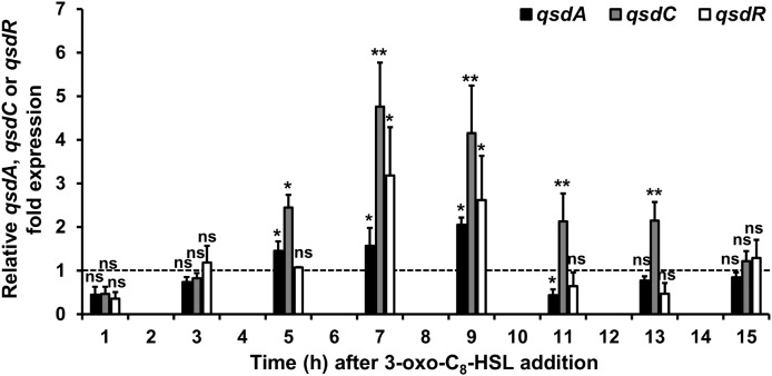 Induction of the qsd operon expression by 3-oxo-C 8 -HSL. qRT-PCR analysis of the qsdA , qsdC , and qsdR transcription was conducted in the R. erythropolis R138 wild-type strain grown in 7H9 medium in which 3-oxo-C 8 -HSL was added at mid-exponential phase. Expression levels of qsdA , qsdC , and qsdR are relative to those obtained in the same medium without the inducer. The dotted line indicates the same mRNA expression between the induced condition and without the inducers. Data shown are mean values obtained from three independent experiments. Statistical analysis was performed by the DataAssist TM software (v3.01) used for calculating relative quantitation of gene expression, based on the comparative C T (2 -ΔΔCT ) method. ∗ p -value