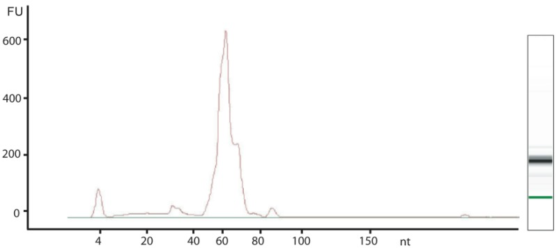 Characterization of BCG small RNA species. An aliquot of small RNA isolated from BCG was analyzed on an Agilent Bioanalyzer small RNA chip. The peak at 4 nt in the electropherogram represents a size standard; the image on the right is the reconstructed gel image of the resolved RNA species.