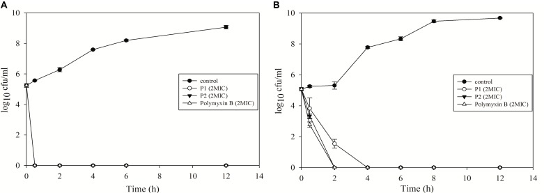 Time-kill kinetics of P1 and P2 against (A) E. coli ATCC 25922 and (B) P. aeruginosa ATCC 27853. The experiment was carried out in triplicate and two biological repeats were performed. Data plotted as mean ± SD.