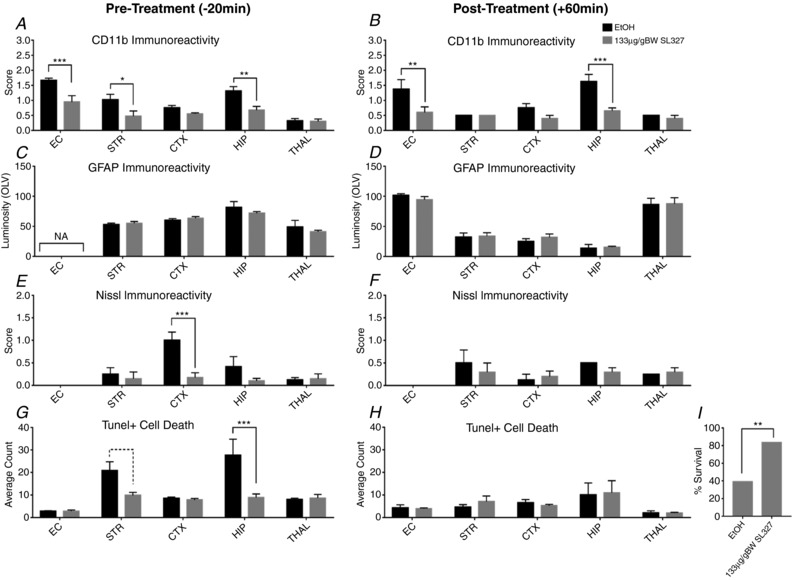 Effect of SL327 on αMβ2+ microglial activation, astroglial activation, neuronal tissue loss (Nissl body presence) and TUNEL+ cell death, when applied 20 min before ( A , C , E , G ) or 1 h post ( B , D , F , H , I ) 30 or 60 min HI Assessment at ×20 microscopy field magnification (mean + SEM over 3 fields). A and B , the levels of CD11b+ microglia are significantly decreased in the SL327 group in white matter (EC) as well as in most grey matter regions (STR, CTX, HIP). E and F , Nissl score was decreased in pre‐treated animals. Cortex was particularly spared compared to vehicle alone. G and H , this trend to decrease is observed with number of TUNEL+ cells. SL327 treated pups have a reduction in dying cells compared to EtOH treated animals, significantly so in pre‐treated STR and HIP. C and D , extent of gliosis and reactive (GFAP+) astrocyte activation was unaffected by the application of SL327. * P