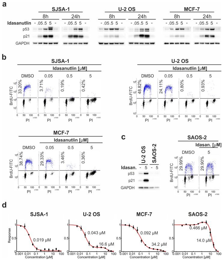 Idasanutlin activates p53 and inhibits the growth of p53 wt cells. ( a – c ) Three p53 wt cell lines, SJSA-1, U-2 OS, and MCF-7, and one p53 del cell line, SAOS-2, were treated for 8 or 24 h with 0.05, 0.5, or 5 μM idasanutlin, or DMSO as a control. Western blot detection of p53, p21, and GAPDH was performed for the cells treated for 8 and 24 h. Cell cycle analysis was performed following 24 h of treatment with BrdU pulse-labeling for the last hour. The cells were fixed and stained with propidium iodide (PI) and FITC-anti-BrdU antibody (BrdU-FITC). The results presented on panels ( a – c ) are representative of at least three independent experiments. ( d ) SJSA-1, U-2 OS, MCF-7, and SAOS-2 cells were treated for five days with increasing concentrations of idasanutlin or an equivalent volume of DMSO, before assessment of cell viability. The data were analyzed with Dr-Fit software [ 26 ] and the best fitting model (red line) was chosen based on the Bayesian Information Criterion (BIC) ( Supplementary Table S1 ). EC 50 values of the growth inhibitory/stimulatory effects determined by the Dr-Fit software are indicated (see also Supplementary Table S1 ). Data points show means ± SD from three independent experiments.