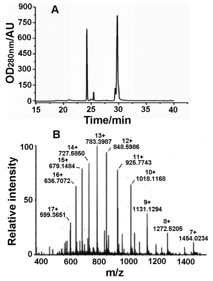 Purification and identification of rLatroeggtoxin-V. ( A ) Chromatogram of RP-HPLC purification of rLatroeggtoxin-V. ( B ) Molecular weight determination of rLatroeggtoxin-V by <t>electrospray</t> ionization mass spectrometry. The m / z value and the number of charges for each rLatroeggtoxin-V ion peak were labeled.