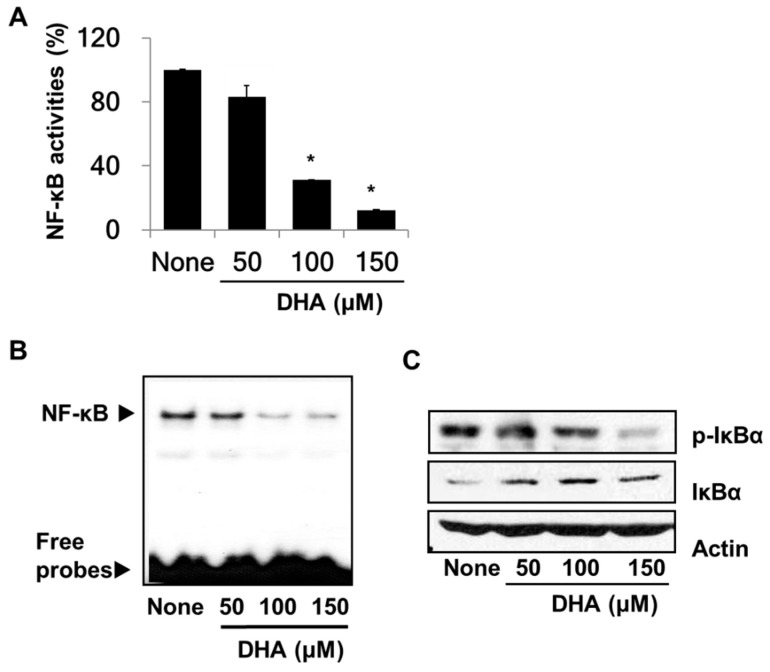 Effect of DHA on nuclear transcription factor-κB (NF-κB) activation and IκBα levels in PANC-1 cells. Cells were pre-treated with the indicated concentrations of DHA for 4 h. ( A ) DNA-binding activity of NF-κB was examined by the luciferase assay. * p