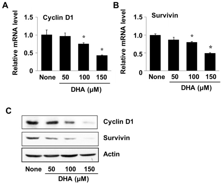 The effect of DHA on cyclin D1 and survivin gene expression in PANC-1 cells. Cells were treated with DHA for 24 h. ( A , B ) A plot of the relative levels of cyclin D and survivin messenger RNA (mRNA), determined by using real-time PCR analysis. * p