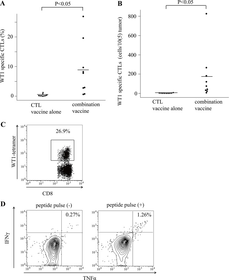 Tumor infiltrated WT1 tetramer + CD8 + T cells ( A ) Bee swarm plots of the frequencies of WT1-tetramer + CD8 + T cells among CD8 + T cells in tumors of the mice treated with the WT1 CTL peptide vaccine alone or the combination vaccine with the WT1 CTL and helper peptides. ( B ) Bee swarm plots of the number of WT1-tetramer + CD8 + T cells per 1 × 10 5 tumor cells. ( C ) A representative result of flow cytometry showing the high frequencies of WT1-tetramer + CD8 + T cells among CD8 + T cells in tumors of the mice treated with the combination vaccine. ( D ) Representative results of flow cytometry of cytokine releasing assay of tumor infiltrating CD4 + T cells in mice treated with the combination vaccine. Splenocytes from a CD45.2 mouse pulsed or not pulsed with the WT1 helper peptide were used as the stimulator and control cells, respectively. The results of intracellular staining of IFNγ and TNFα of CD3 + CD4 + CD45.1 + T cells are shown.