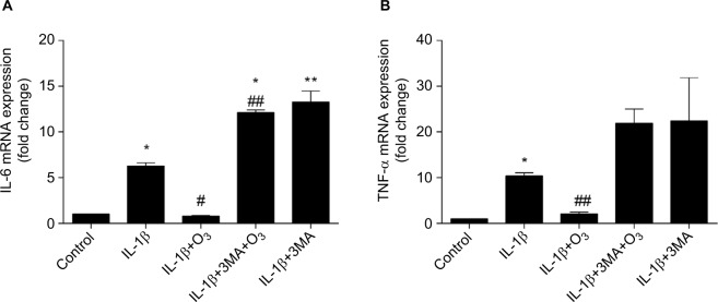 Ozone suppresses inflammatory cytokines in chondrocytes stimulated with IL-1β (10 ng/mL). Notes: Cells were treated with IL-1β (10 ng/mL) for 24 hours, with or without pretreatment with the autophagy inhibitor 3MA (100 nM) for 12 hours. The mRNA expression of IL-6 ( A ) and TNFα ( B ) in chondrocytes stimulated with IL-1β was measured by qRT-PCR. The data are presented as the mean ± SD of three independent experiments. * P