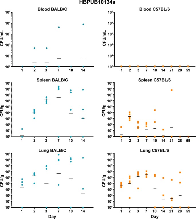 Bacterial burden observed during a serial sampling study of mice exposed to aerosolized B . pseudomallei HBPUB10134a. BALB/c mice are depicted in the top row (blue) and C57BL/6 mice are depicted in the bottom row (orange) . The CFU determinations for blood, Spleen, and lung are shown and the geometric mean is depicted with a horizontal bar.