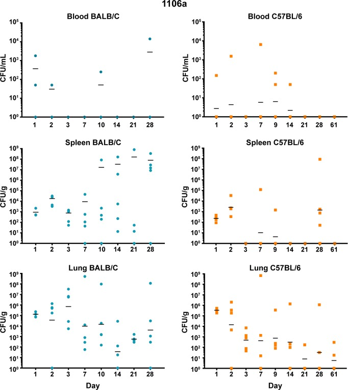 Bacterial burden observed during a serial sampling study of mice exposed to aerosolized B . pseudomallei 1106a. BALB/c mice are depicted in the top row (blue) and C57BL/6 mice are depicted in the bottom row (orange) . The CFU determinations for blood, Spleen, and lung are shown and the geometric mean is depicted with a horizontal bar.